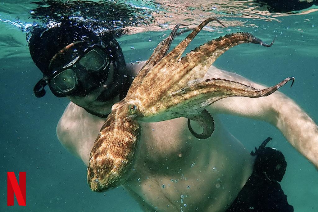 My Octopus Teacher: Your Next Netflix Flick