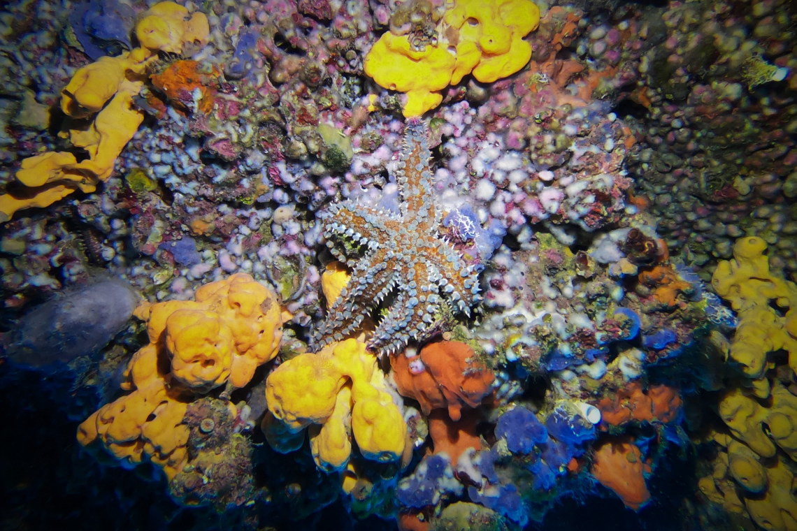 Aegean Sponges