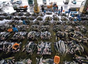 Shark Market